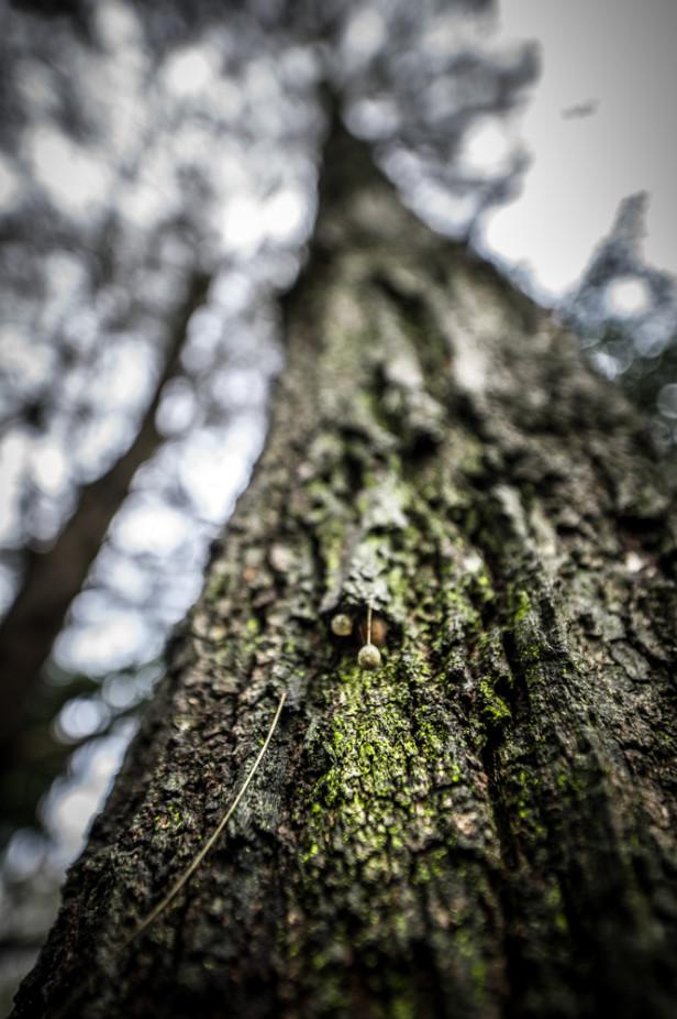 Zen Photo Walk 1000px-9