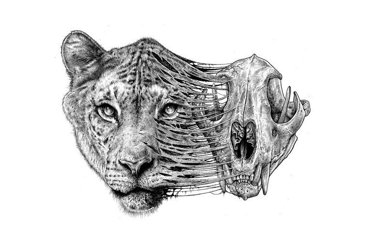 Line Drawing Jaguar : Best deer images line drawings outline