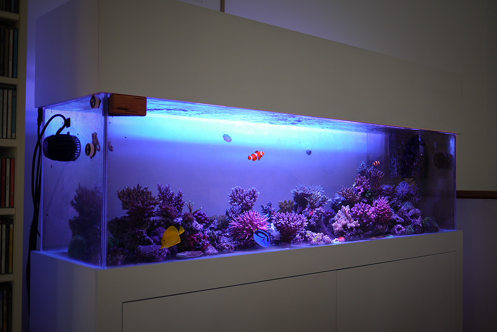 Zen aquarium project zen garage for Decoration zen aquarium
