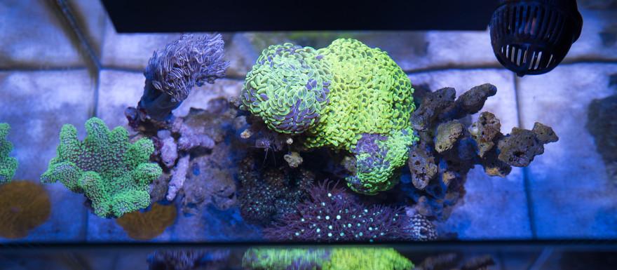 fluval-edge-2-reef-nano-topdoen-lps