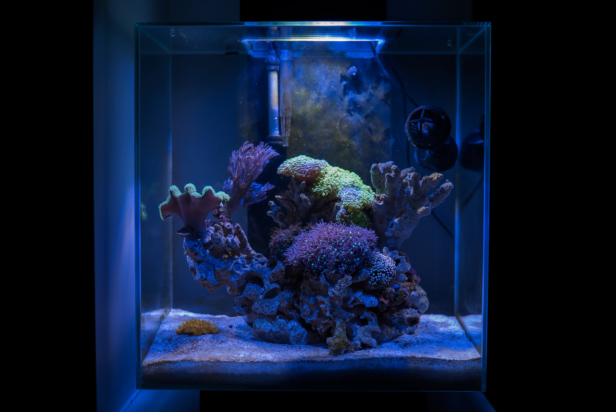 Fish tank queensland - Fluval Edge 2 Reef Nano