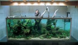 nature-aquarium-by-takashi-amano-wallpaper