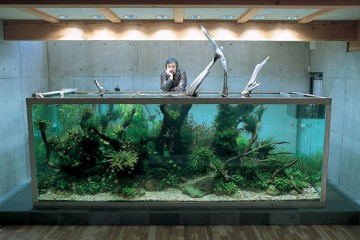 nature-aquarium-by-takashi-amano-wallpaper
