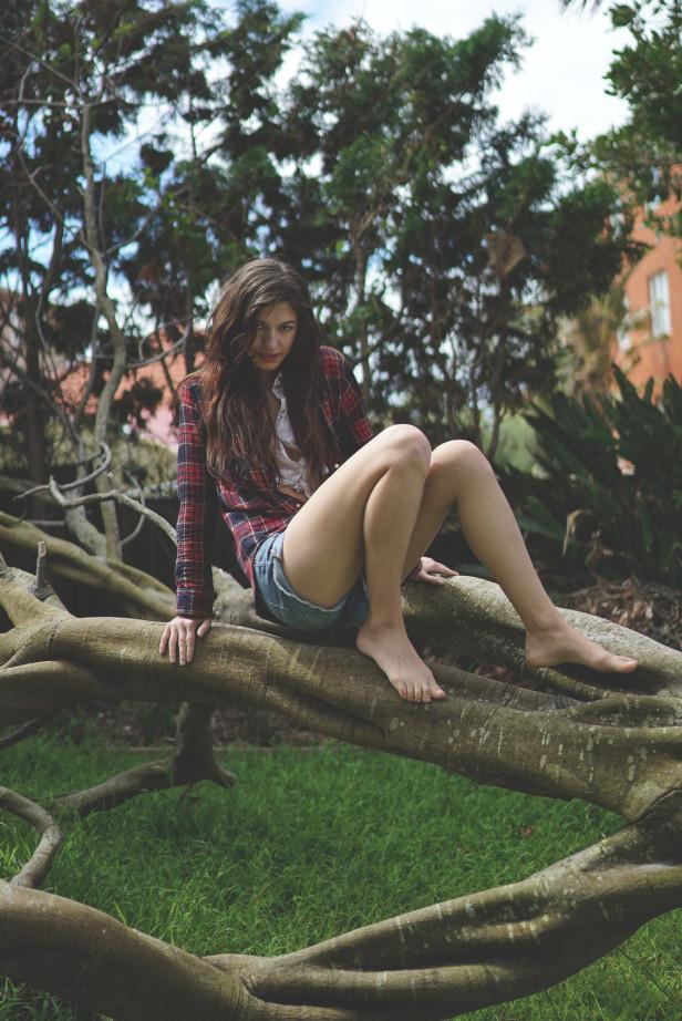bri_justinfox_tree_p1
