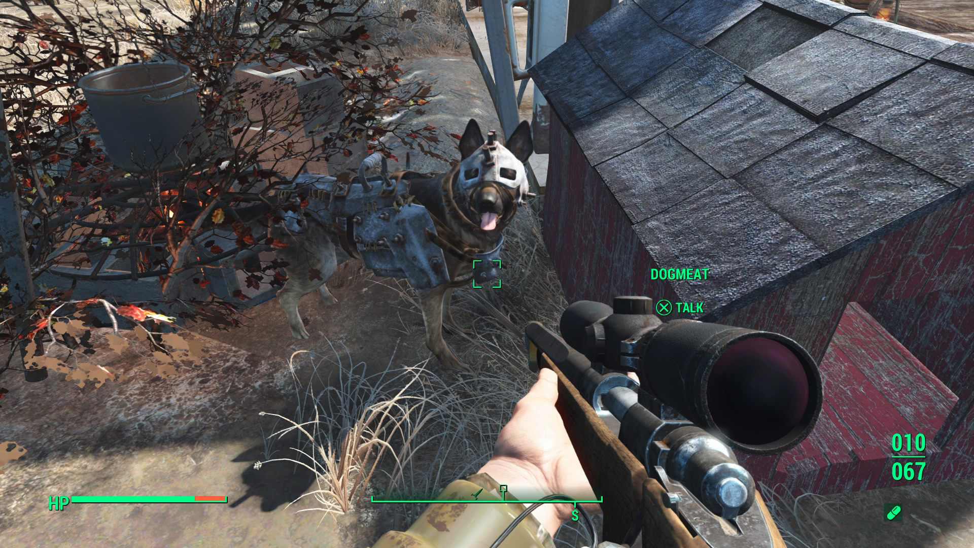 dogmeat