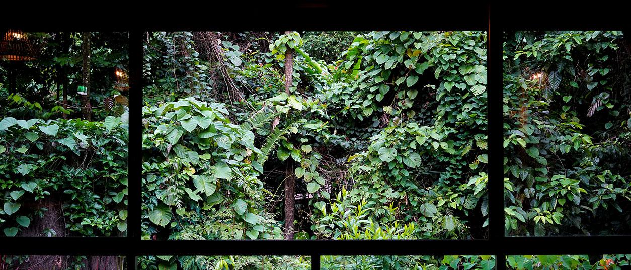 Zen-in-the-Daintree---feature-image