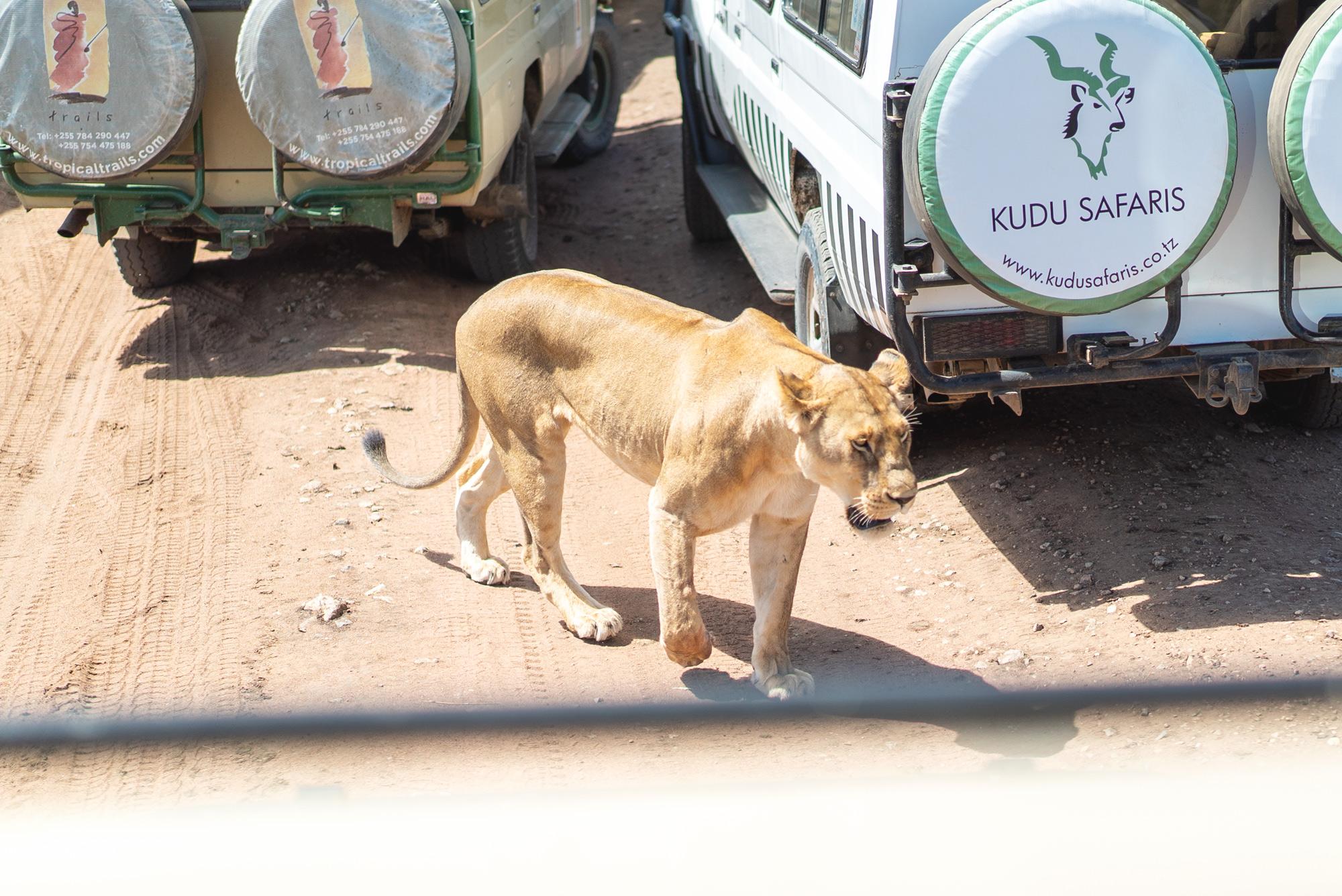 lion_cars3